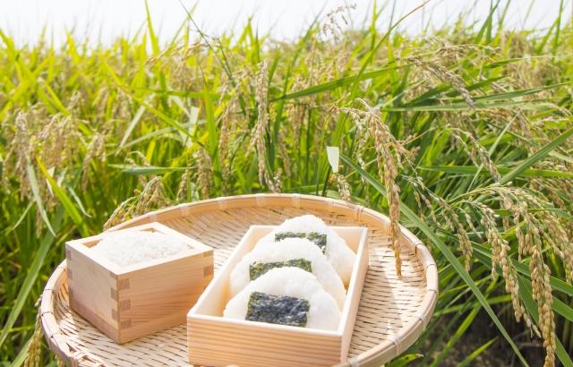 日本だからこそできる栄養改善への取り組み